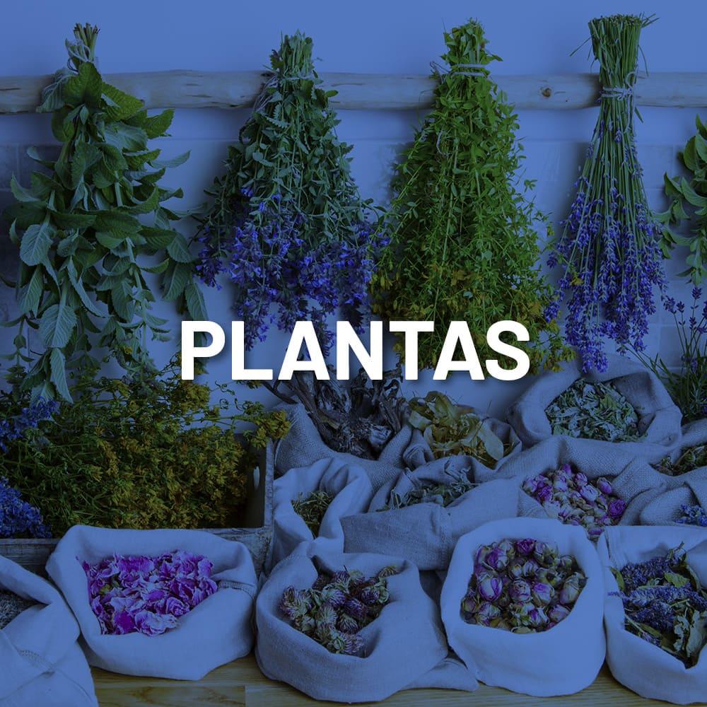 Mayoreo-Plantas-1